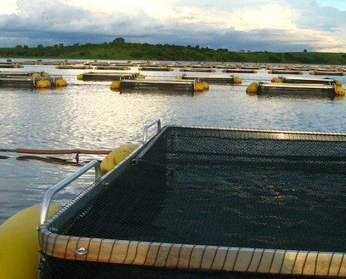piscicultura-em-tanques-rede