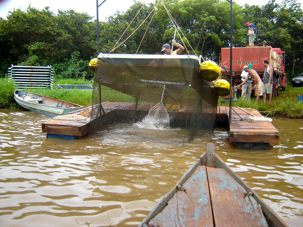Despesca iarema for Elaboracion de estanques para piscicultura