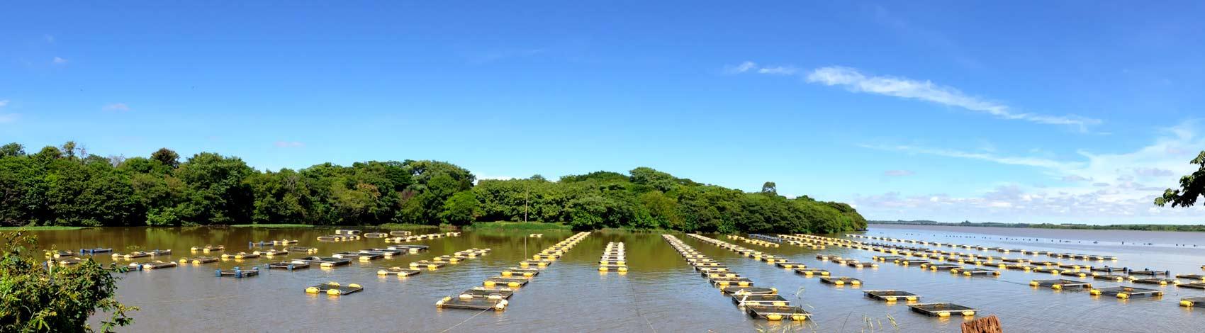 piscicultura-itambaraca